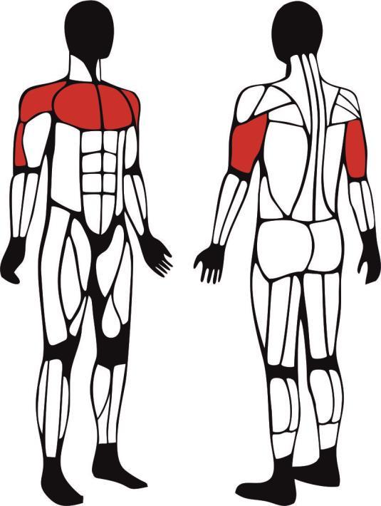 Wyciskanie dla niepełnosprawnych - główne mięśnie zaangażowane podczas ćwiczeń